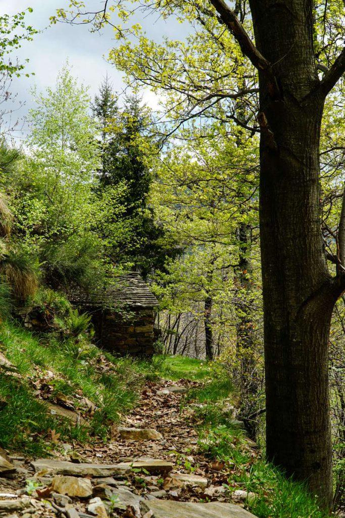 Der Wald von Cicogna