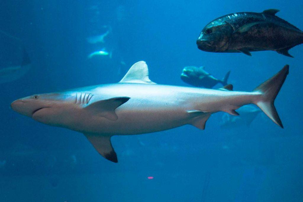 Eine der beliebtesten SehenswürdigKeiten in Dubai: das Dubai Aquarium und Underwater Zoo