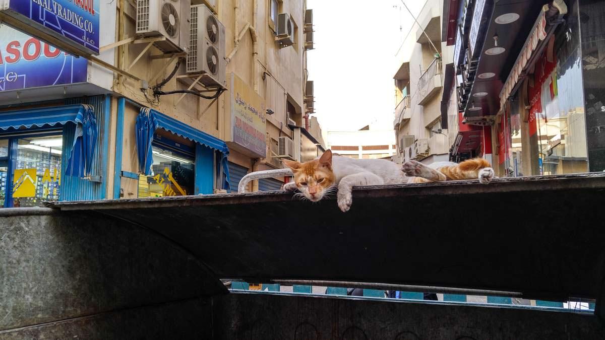 Katze im Souk von Dubai
