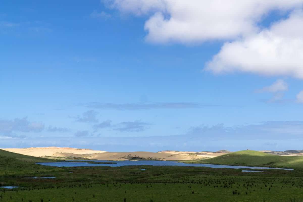 Grüne Hügel treffen auf Sanddünen in Neuseeland