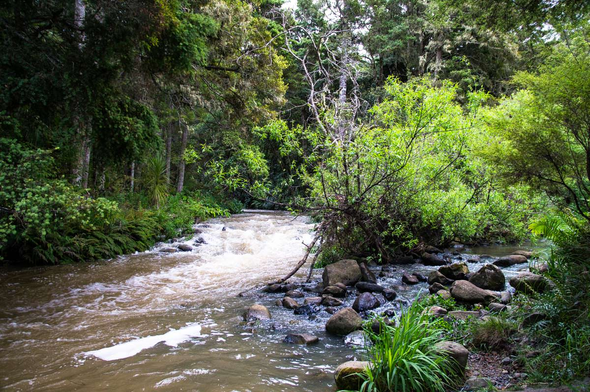 Fluss im Whangarei Falls Scenic Reserve in Neuseeland