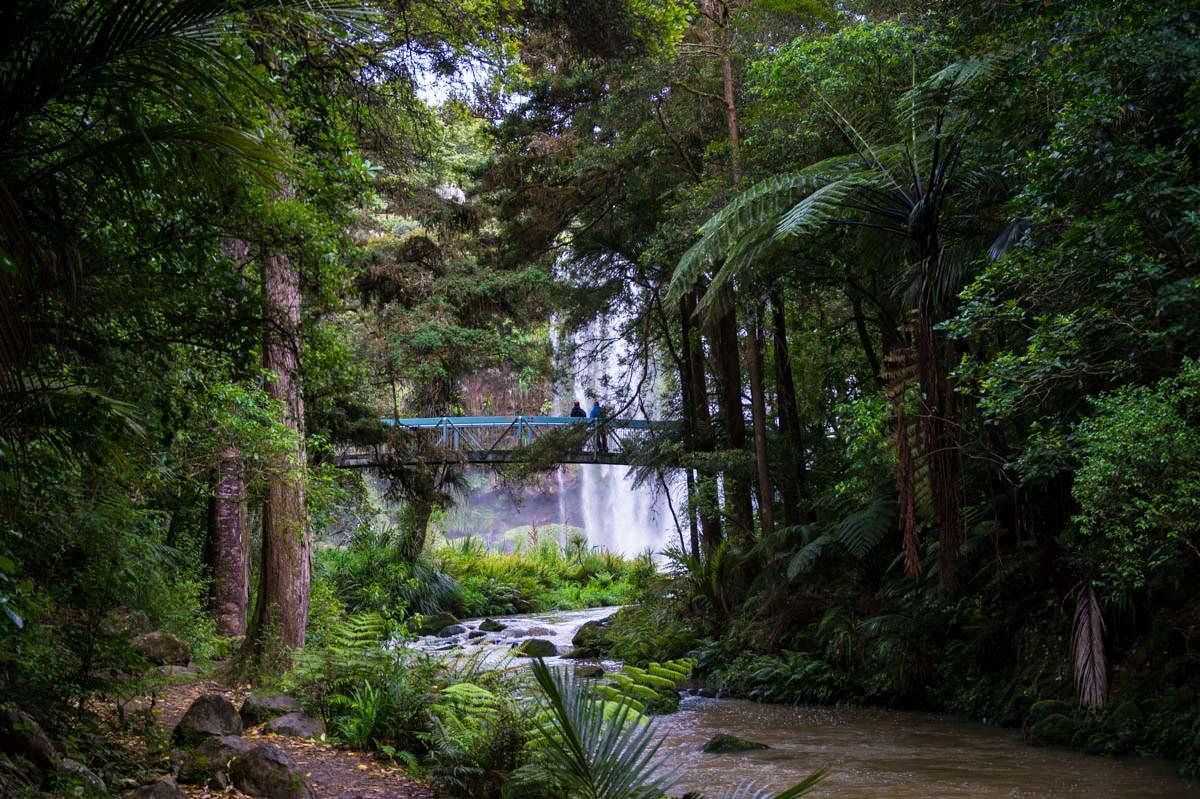 Whangarei Falls im Whangarei Falls Scenic Reserve in Neuseeland