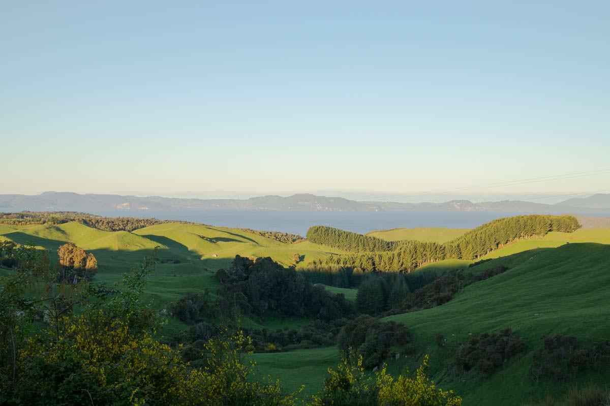 Die typische Roadtrip-Landschaft in Neuseeland