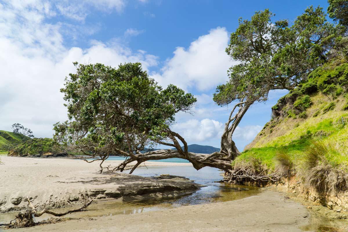 Flussmündung in der Elliot Bay (Bay of Islands) von Neuseeland