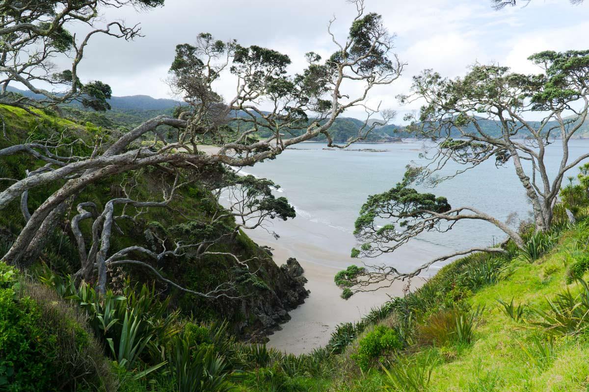 Abgelegender Strand der Elliot Bay (Bay of Islands) von Neuseeland