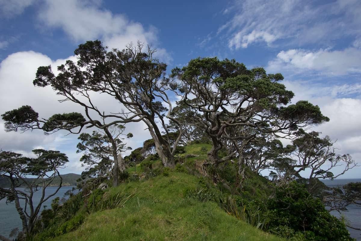 Vogelschutzgebiet Te Pahii in der Elliot Bay von Neuseeland