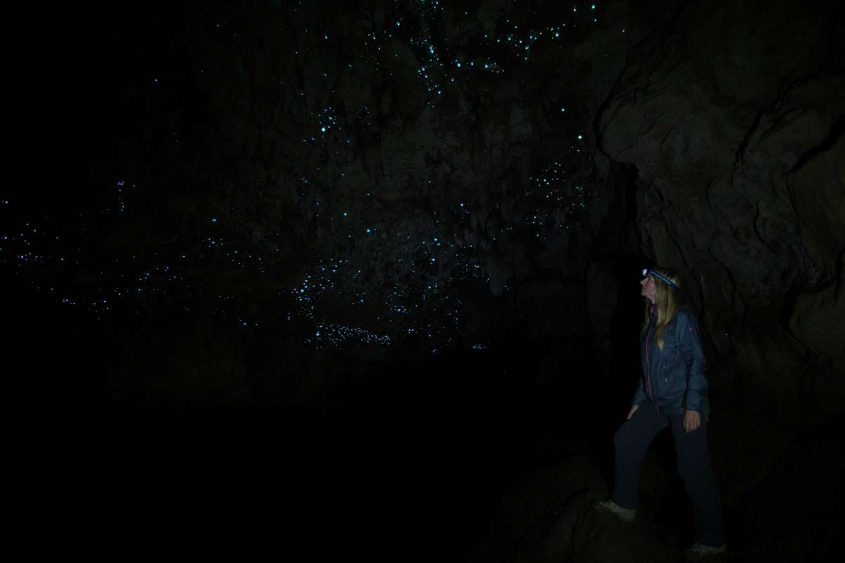 Glühwürmchen(Glowworm) in der Waipu Cave in Neuseeland
