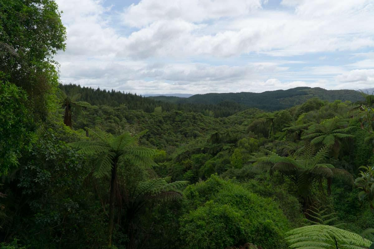 Landschaft vom Waimangu Volcanic Valley in Neuseeland