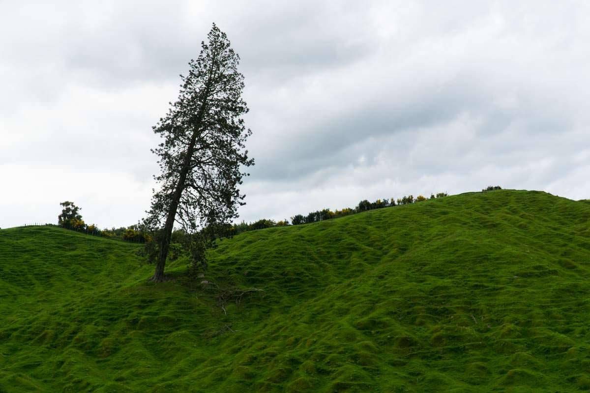Hobbitlandschaft in Neuseeland