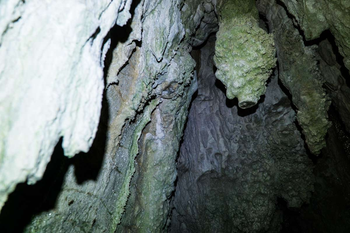 Höhle beim Ruakuri Walk in Neuseeland