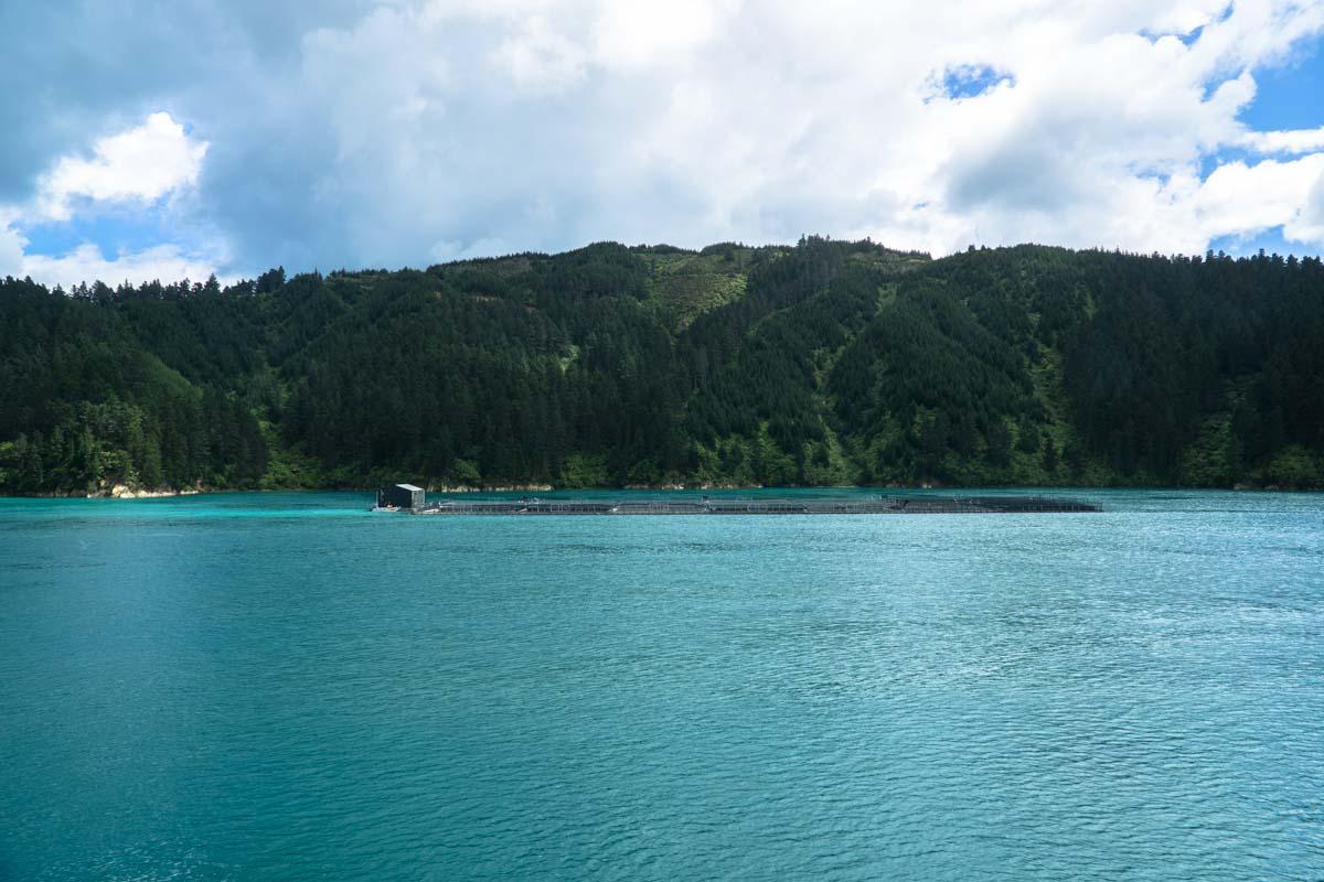 Muschelfarm in der Cook Strait von Neuseeland