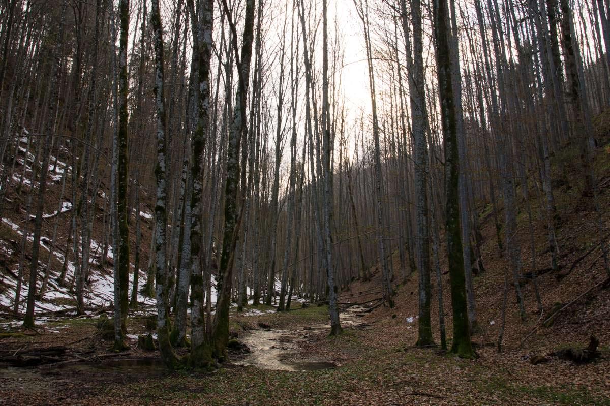 Wald am Ufer des Alpsee (Füssen)