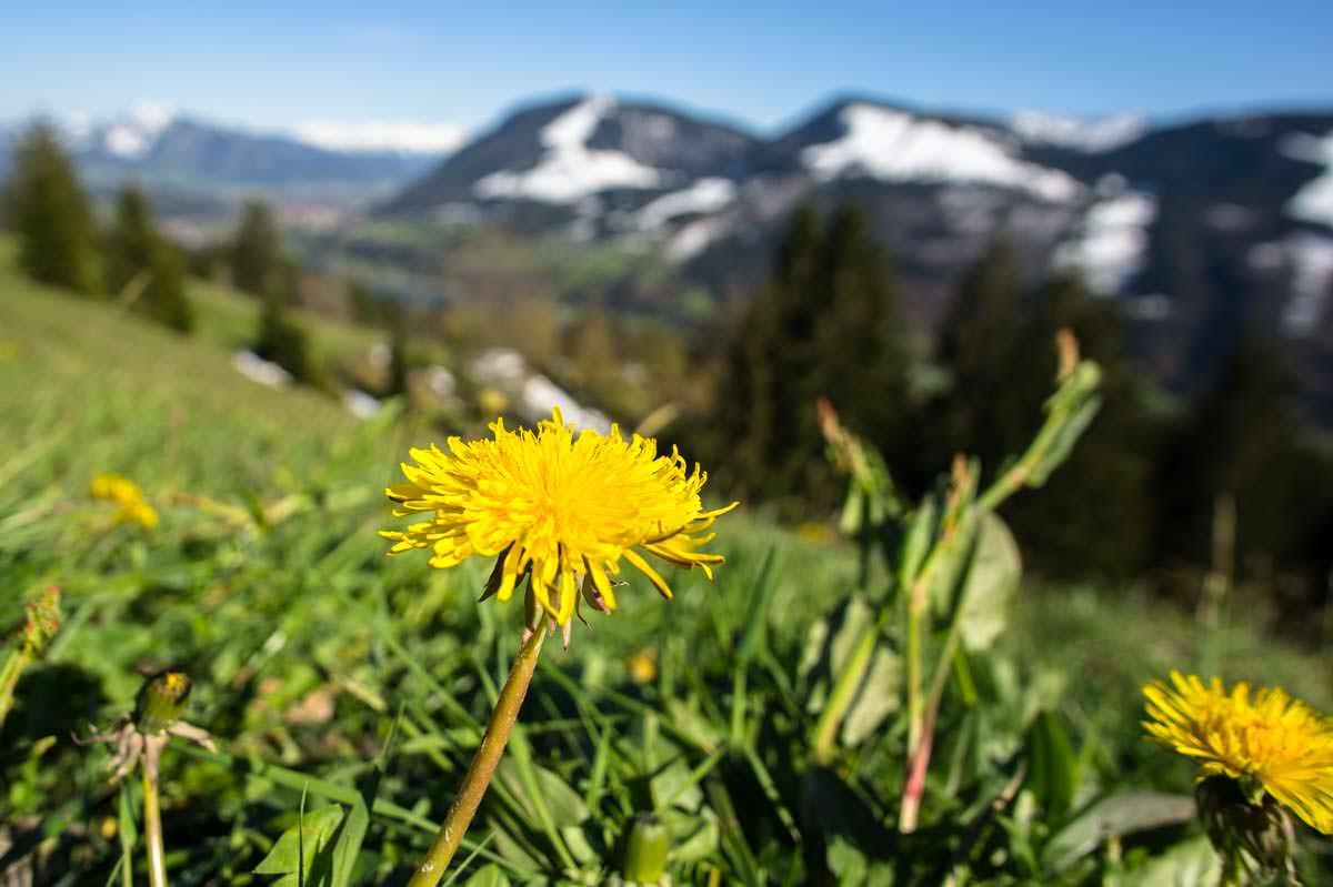 Blumenwiese auf der Thaler Höhe