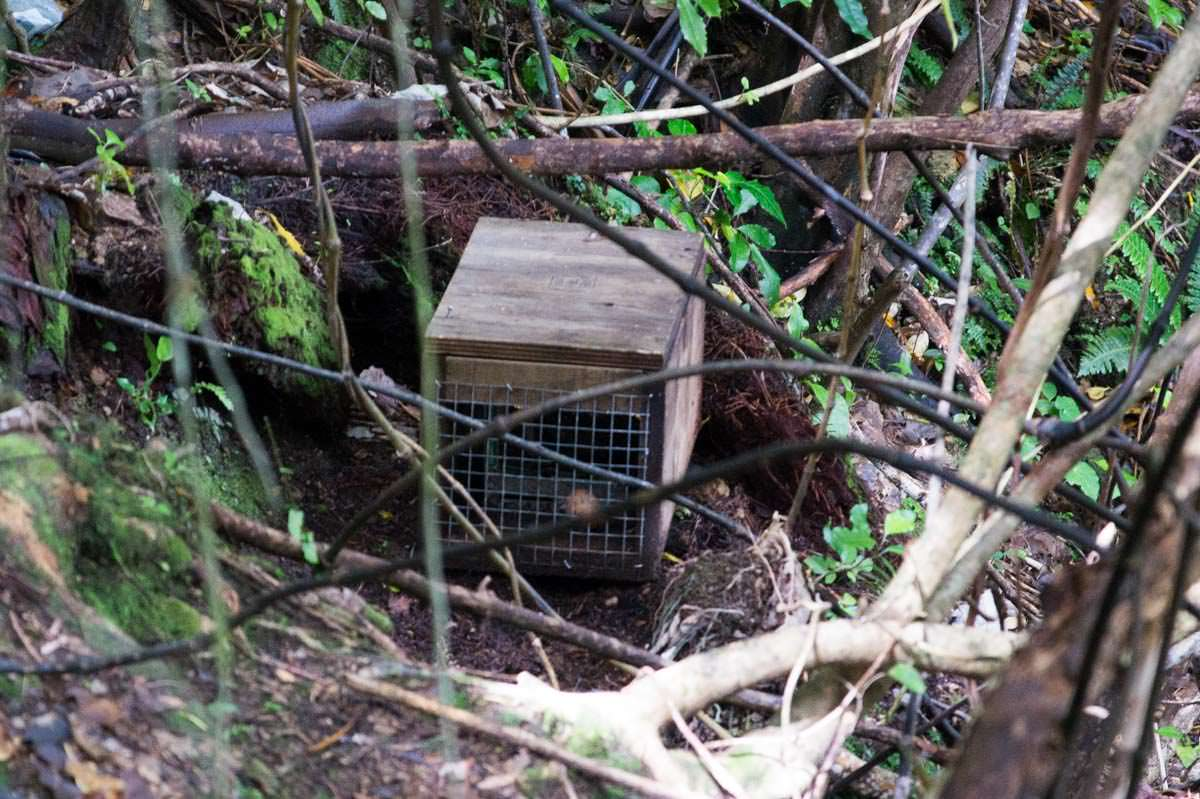 Pest Control (Possumfallen) in Neuseeland
