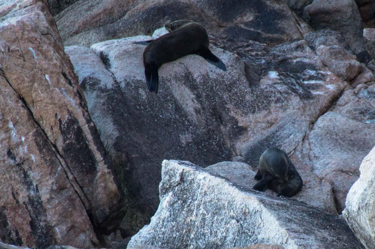 Seerobben am Separation Point im Abel Tasman Nationalpark