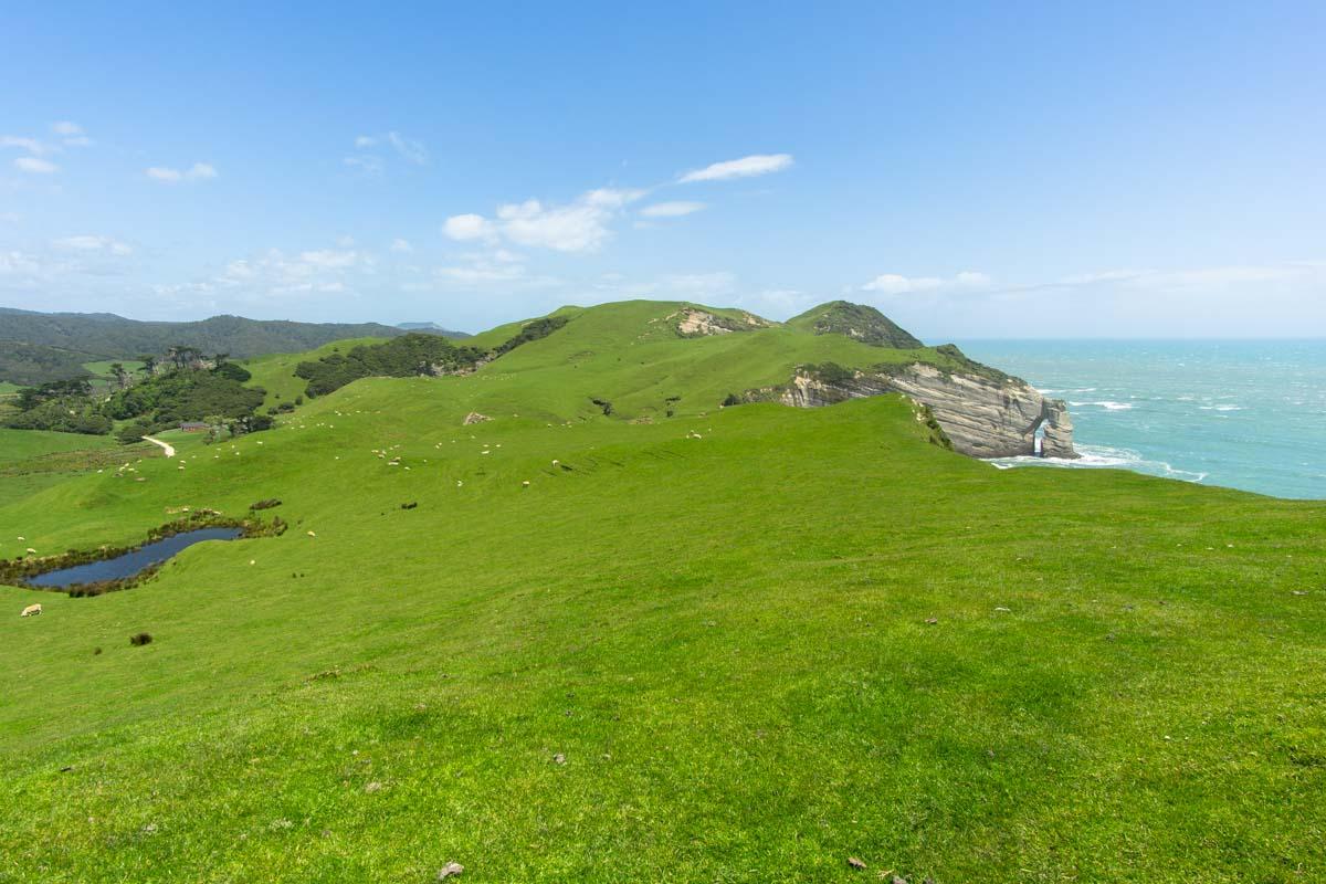 Hill Top Walk am Cape Farewell in Neuseeland