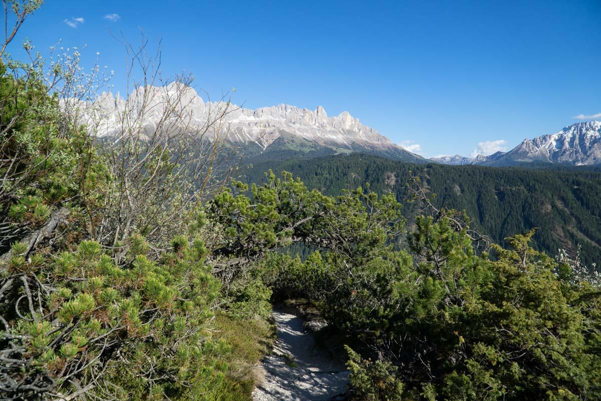 Abstieg vom Tschafon nach Wuhnleger mit Rosengartengruppe