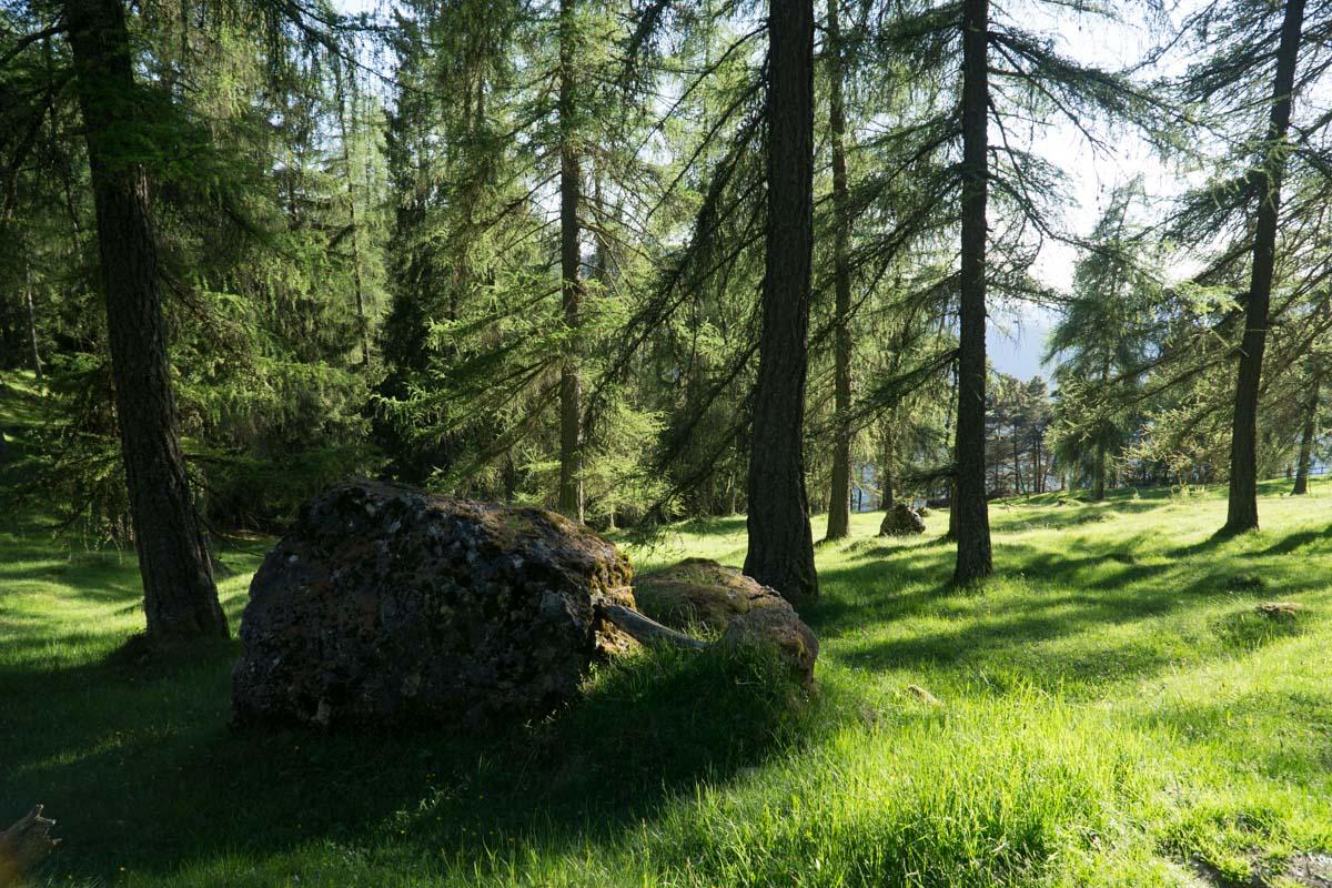 Wald am Tschafon in den Dolomiten