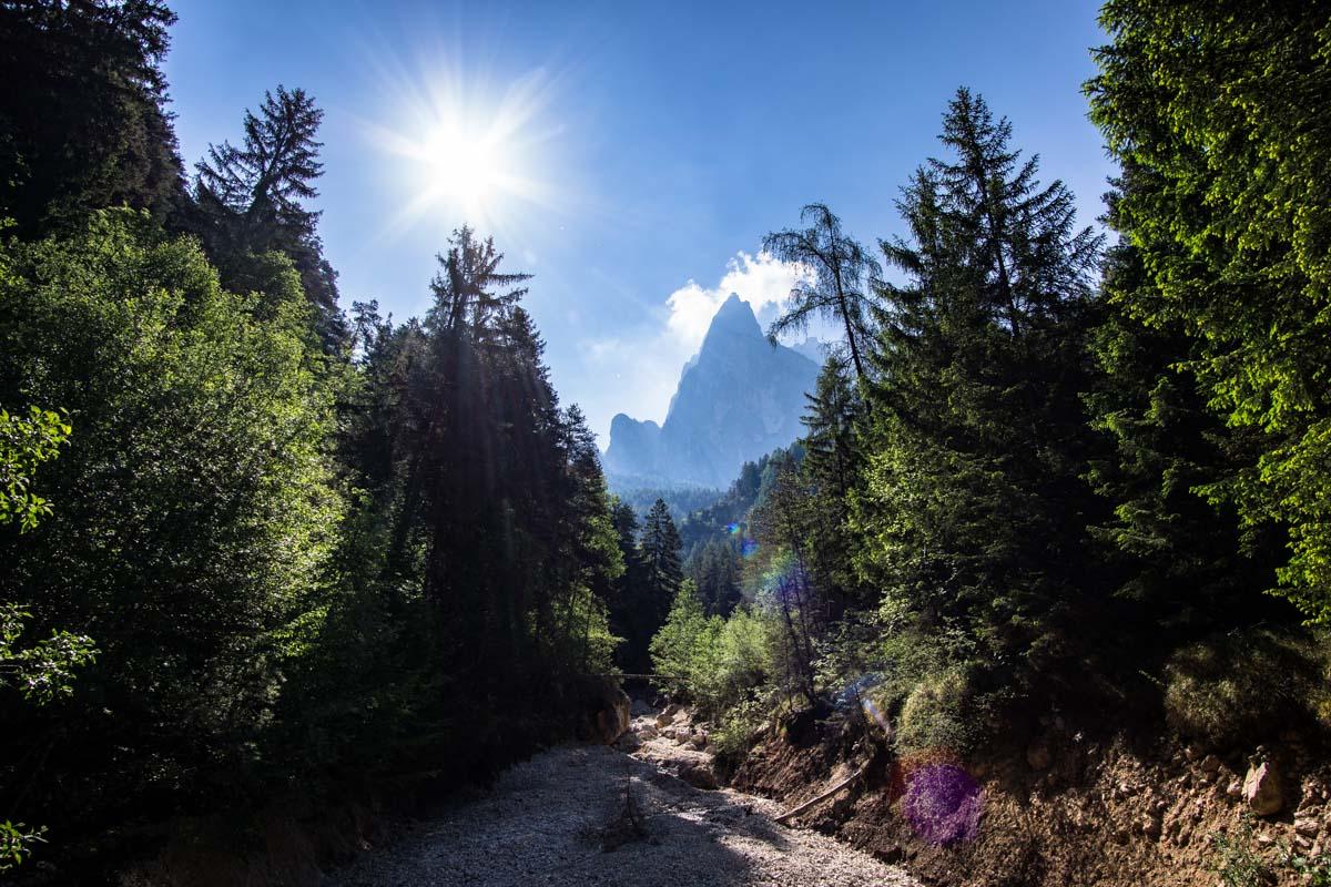 Wald mit Schlern im Hintergrund