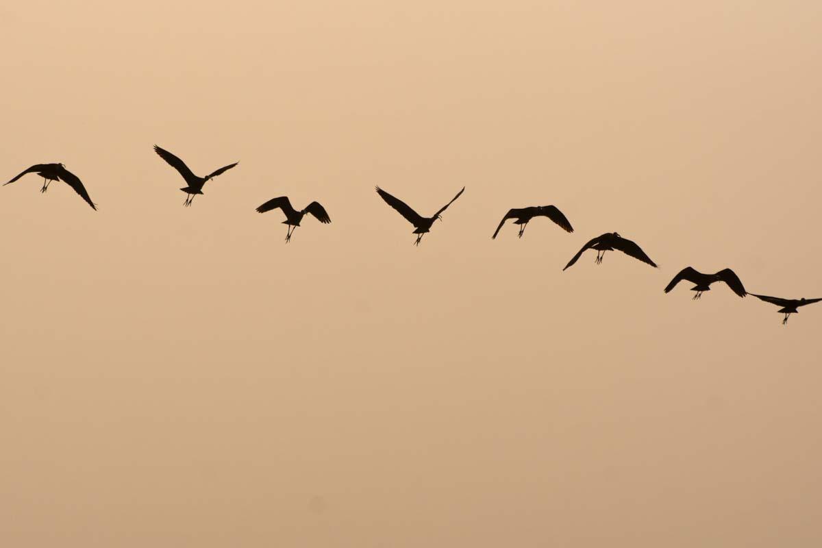 Vogelformation im Chobe NP