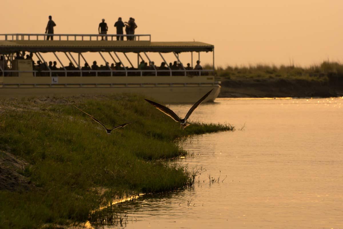 Boote anderer Touranbieter auf dem Chobe