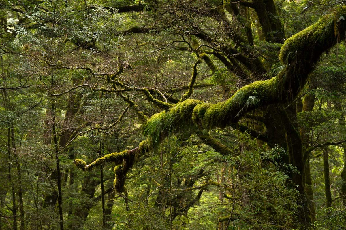 Grüner Küstenwald am Haast Pass Drive