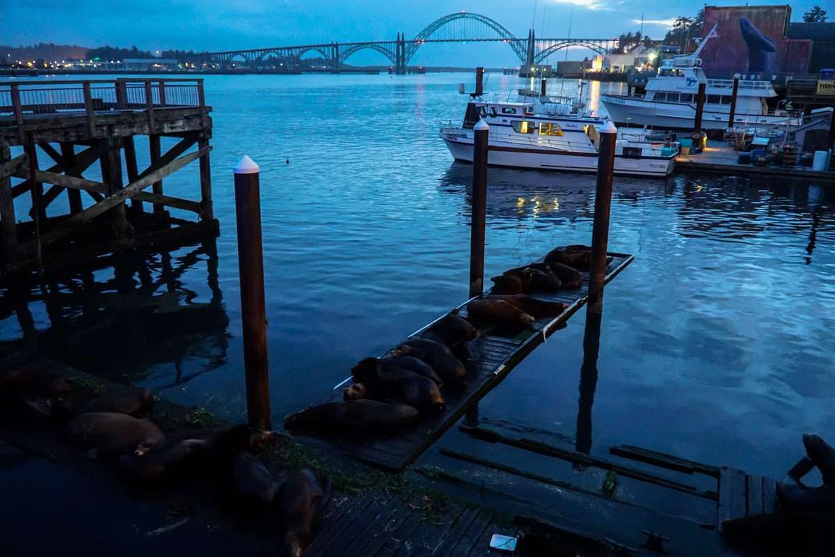 Newport Sea Lion Deck (Oregon Coast)