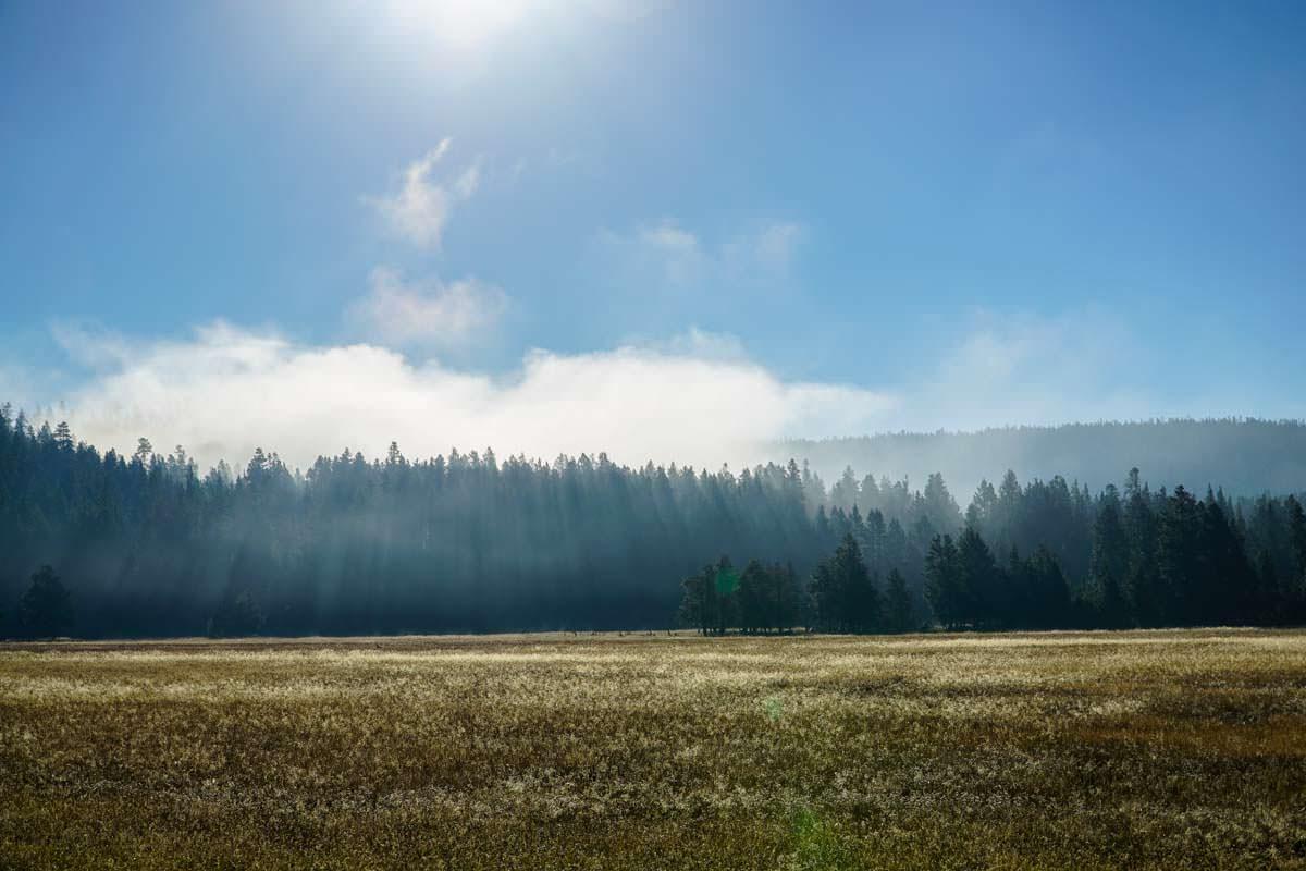 Nebellandschaft im Yellowstone NP
