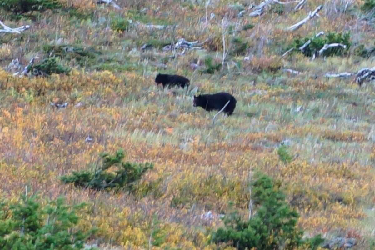 Vor einem Besuch im Glacier Nationalpark macht es Sinn, sich Tipps für den Umgang mit Bären geben zu lassen