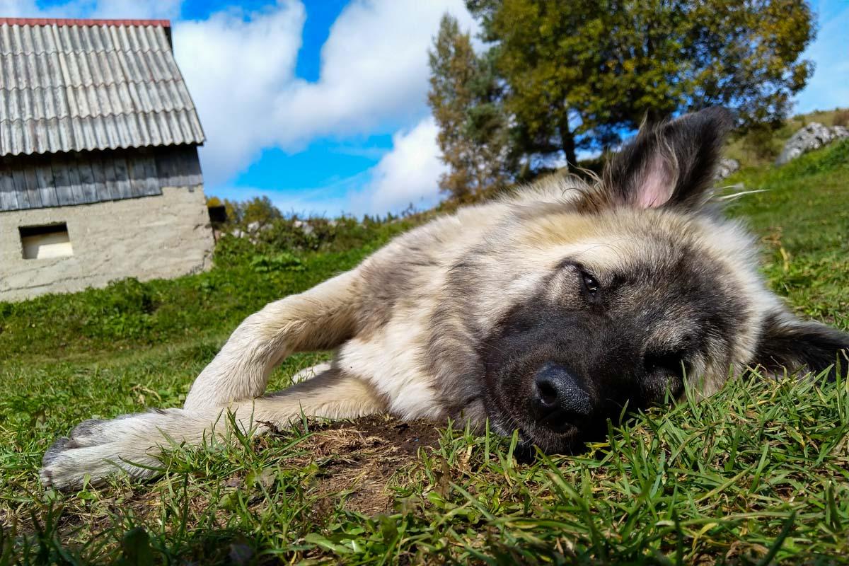 Straßenhund in Montenegro