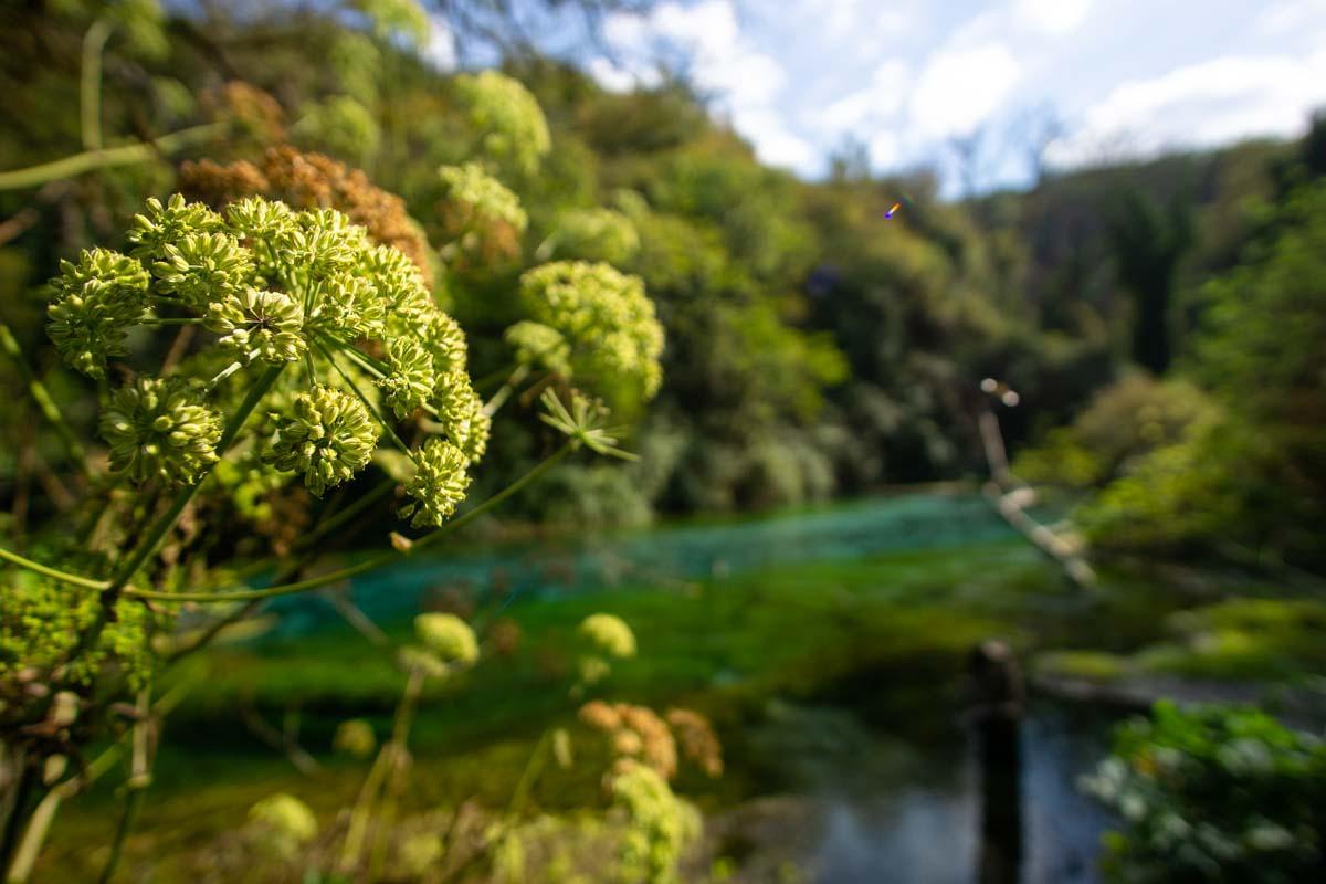 Dschungelartige Landschaft am Syri i Kalter (Albanien)