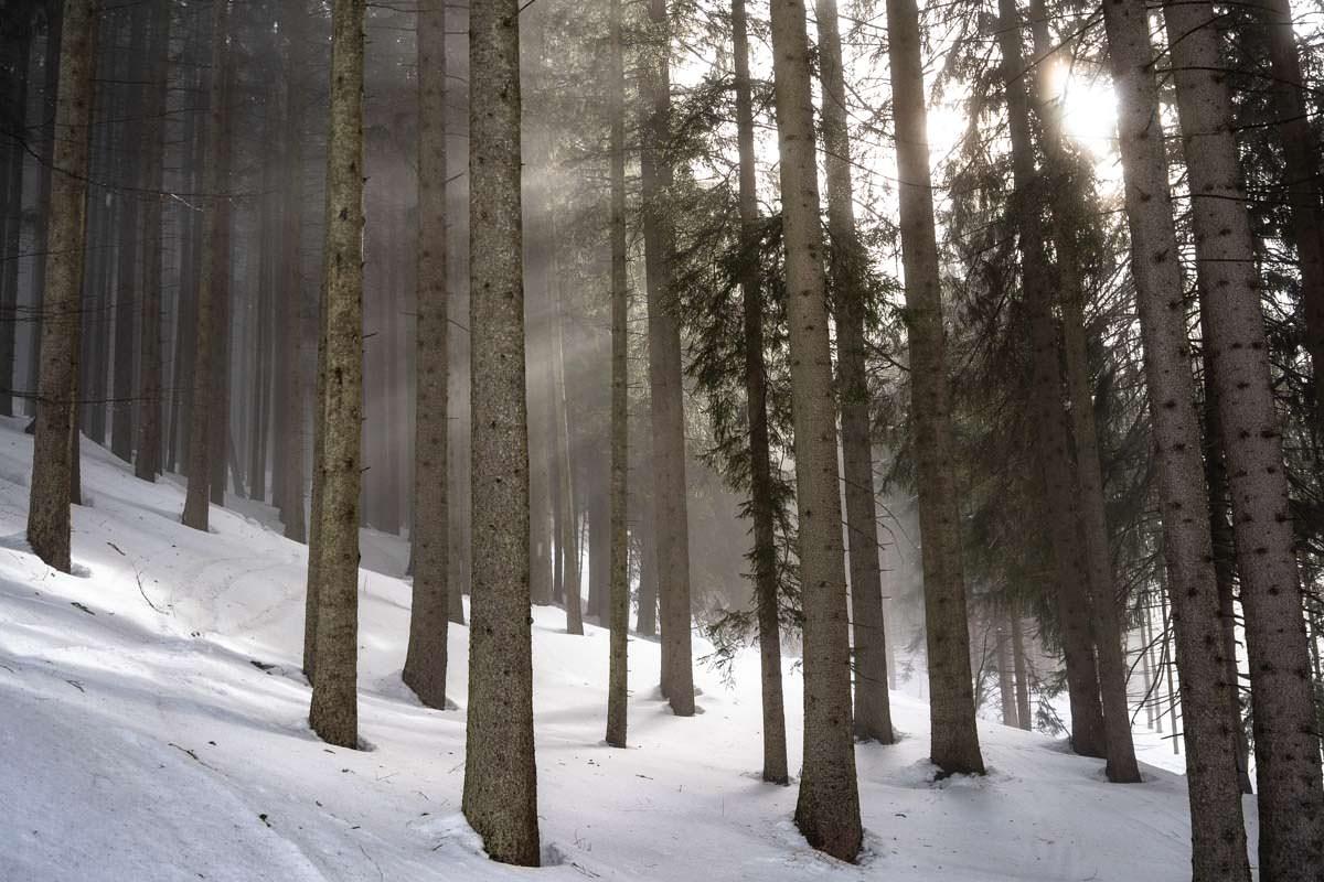 Sonnenstrahlen dringen durch Wald im Allgäu