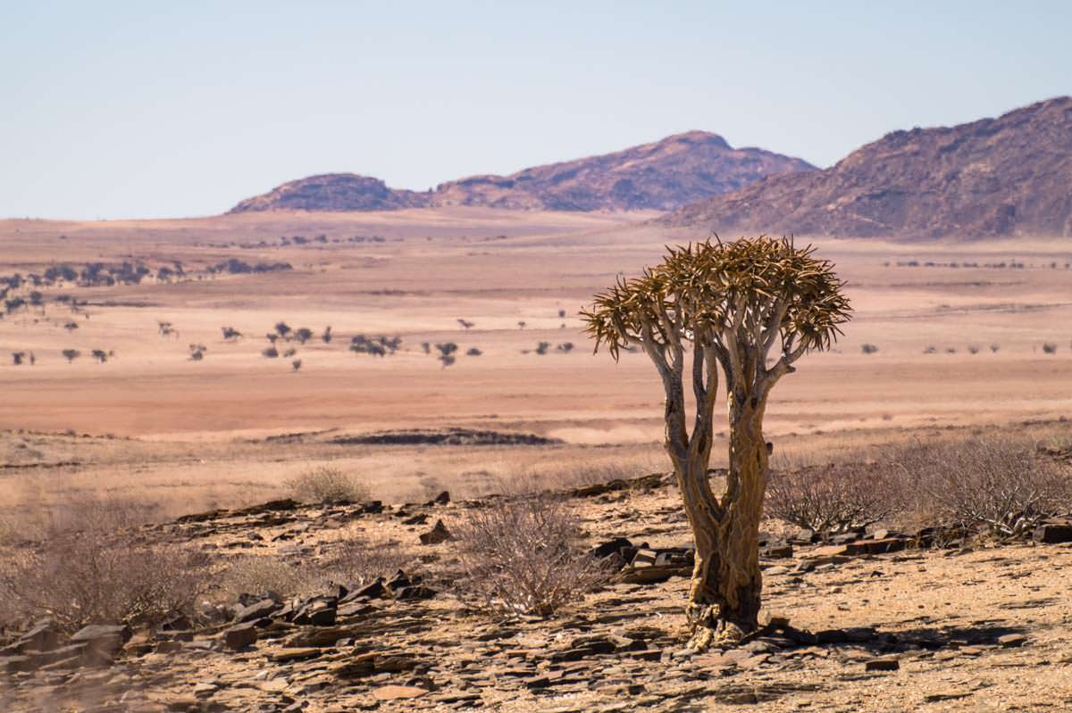 Namib Naukluft Nationalpark (Namibia)