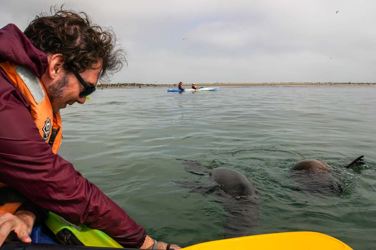 Pelican Point Kayaking mit Robben (Walvis Bay)