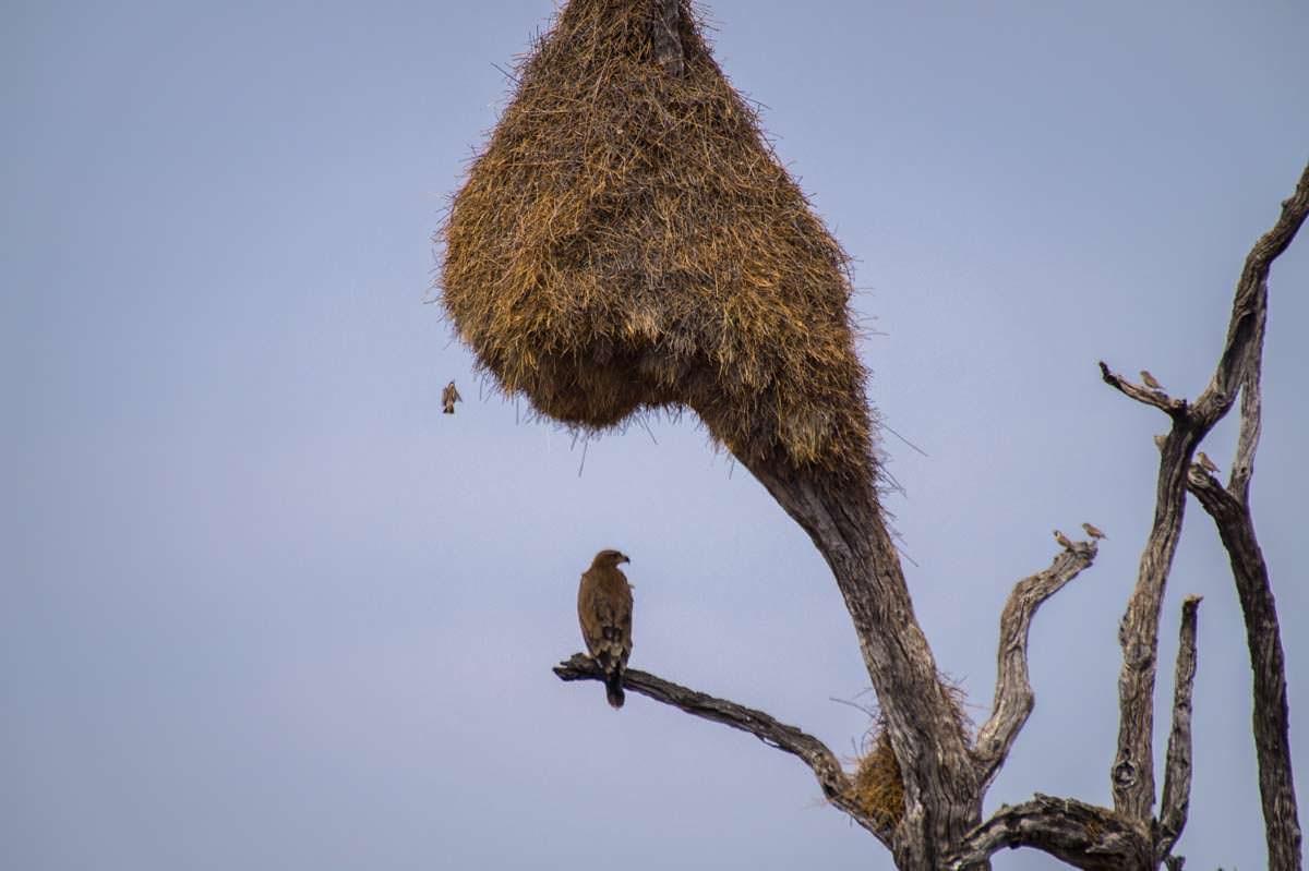 Vogelnest in Namibia