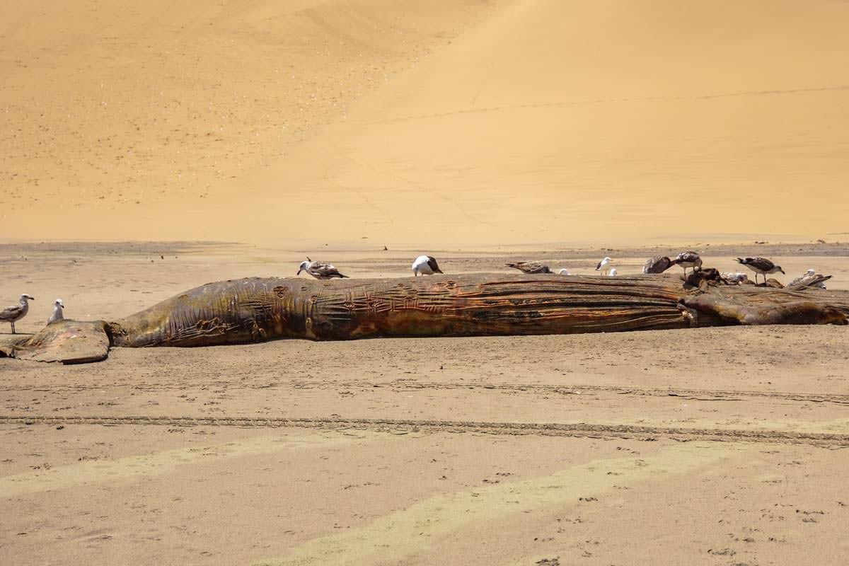Toter Wal am Strand (Walvis Bay, Namibia)