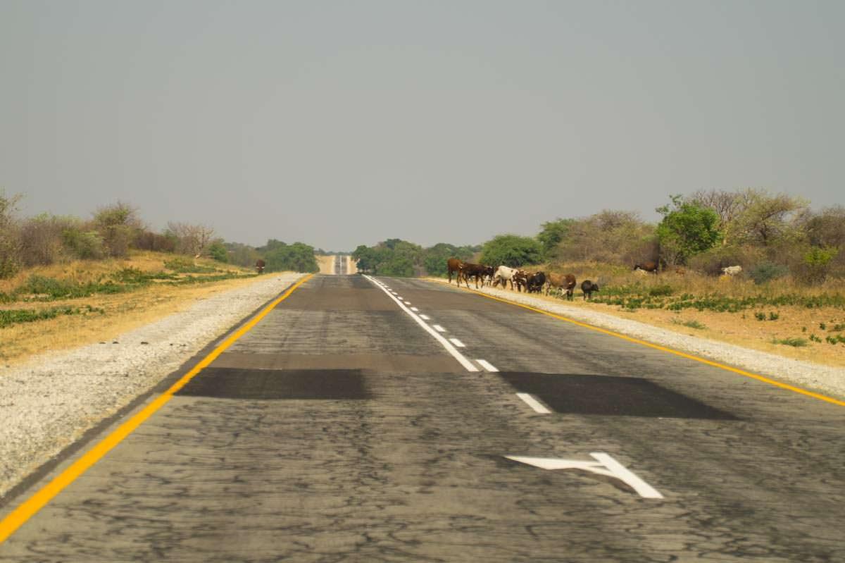 Straße im Caprivi-Streifen (Namibia)