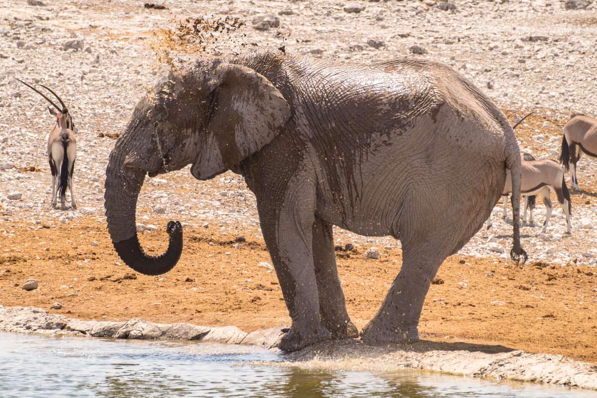 Elefant nimmt ein Schlammbad im Etosha NP