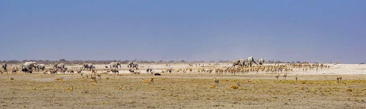 Wasserloch mit Wildtieren im Etosha