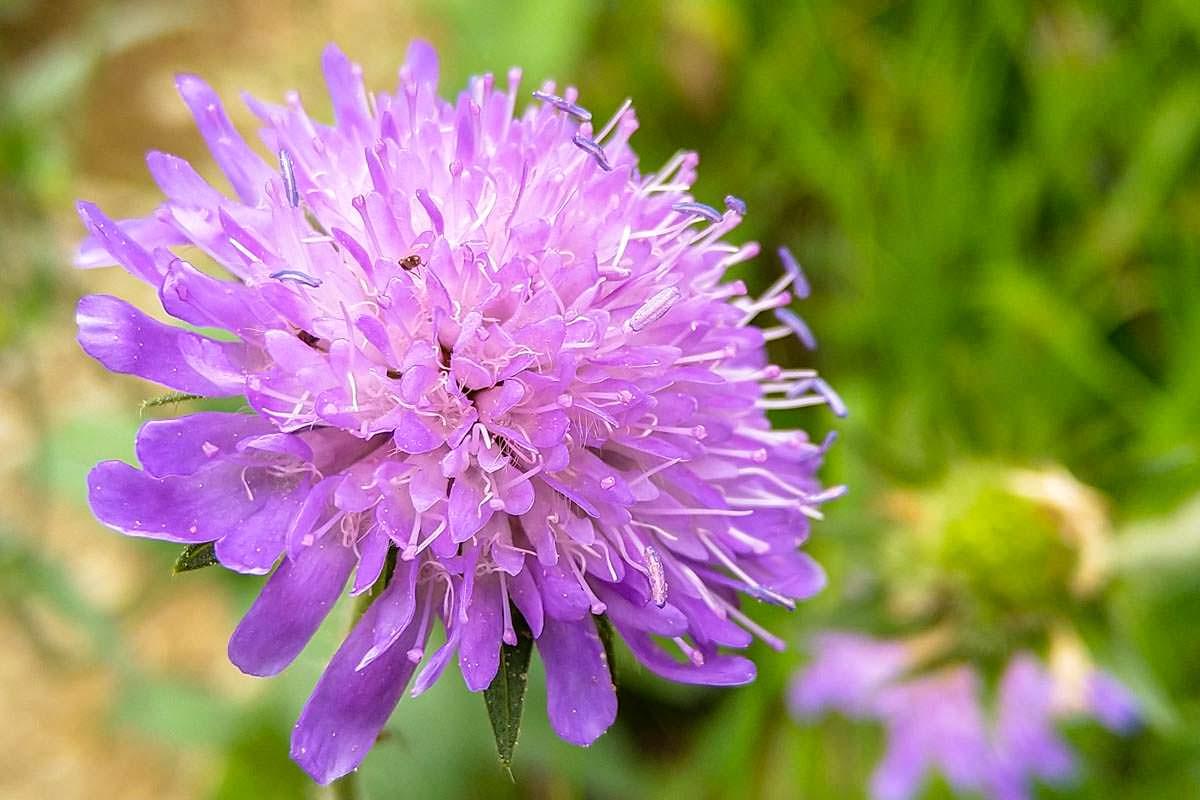 Bunte Wildblumen beim Wandern im Allgäu
