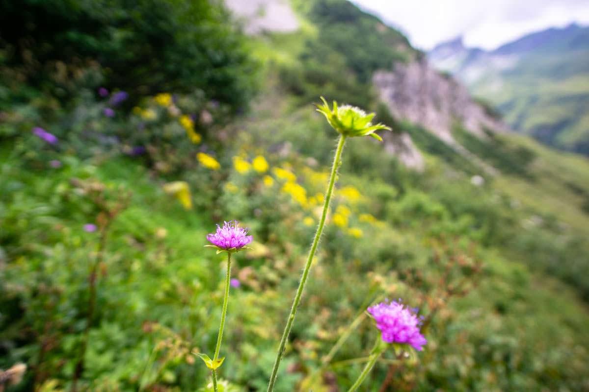 Auf der Wanderung zum Prinz-Luitpold-Haus sehen wir unzählige Wildblumen