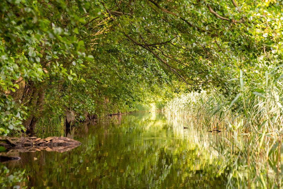An vielen Stellen ist die Obere Havel sehr eng und dicht bewachsen - Wasserwandern ist hier ein Genuss
