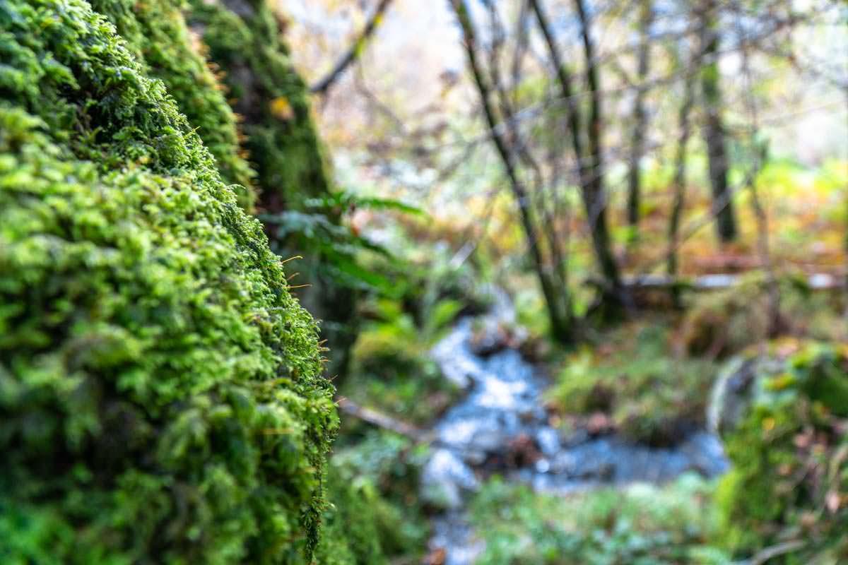 Der Wald am Fuße vom Ben Aan wirkkt fast shcon wie ein Regenwald