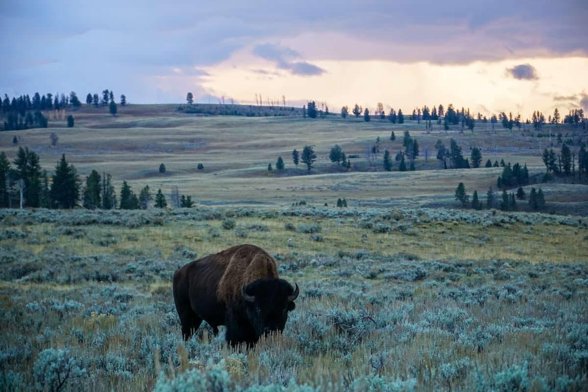 Ein Roadtrip durch den Nordwesten der USA beinhaltet auch immer die Begegnung mit großen Wildtieren