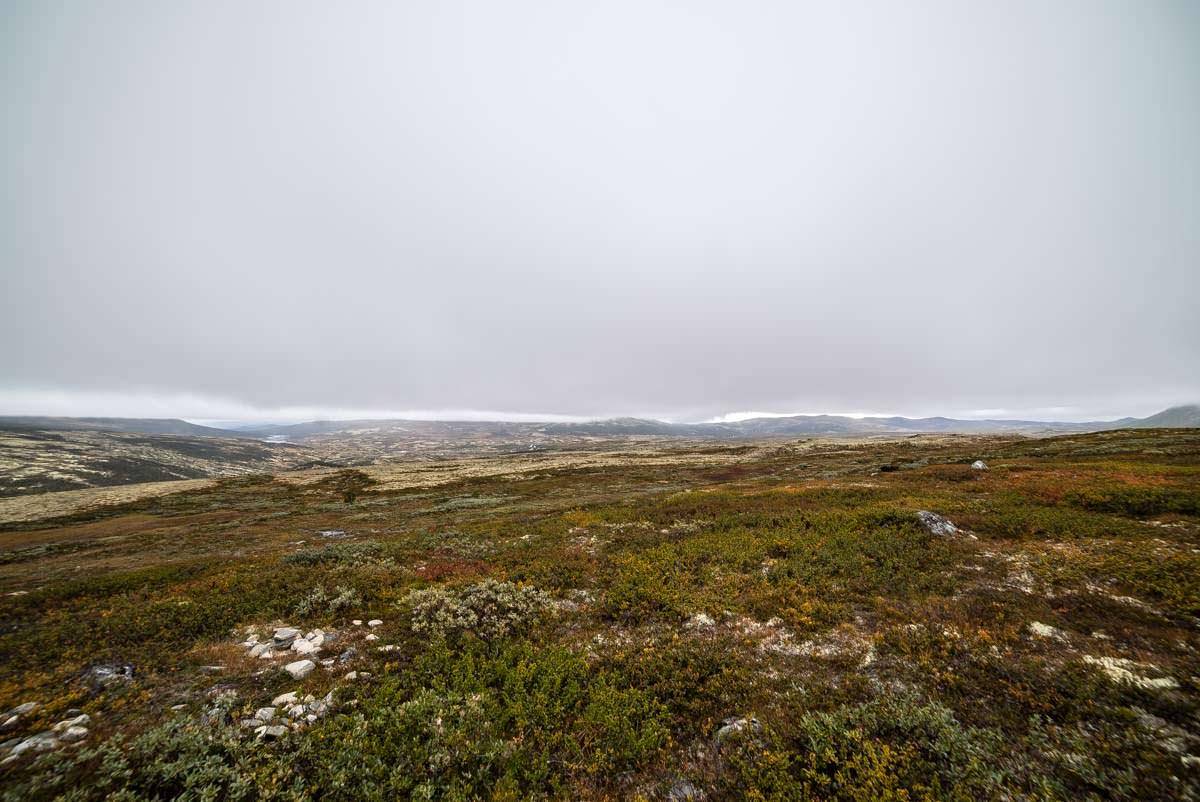 Auf der Suche nach Moschusochsen im Dovrefjell Nationalpark