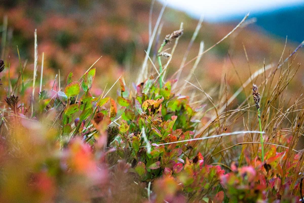Bunte Herbstlandschaft im Dovrefjell Nationalpark