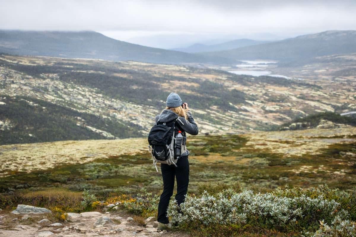 Der Moschusochsen-Trail im Dovrefjell Nationalpark