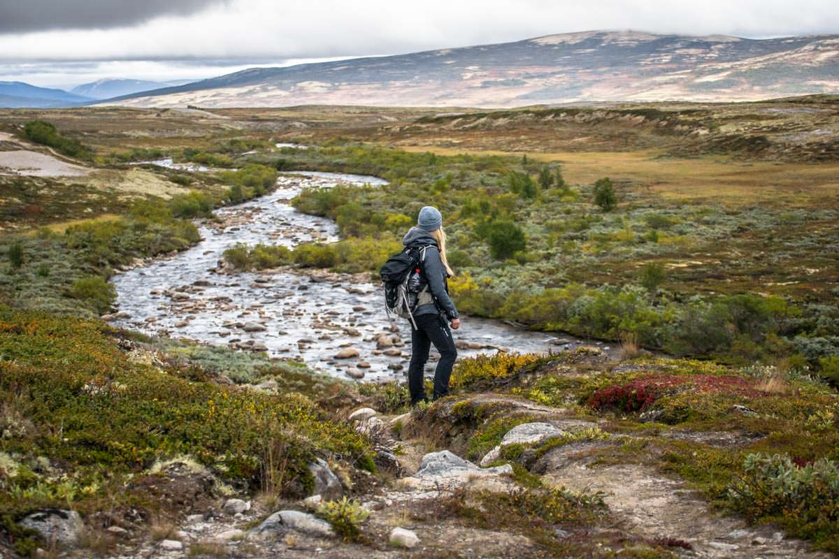 Auf der Suche nach Moschusochsen im Dovrefjell Nationalpark in Norwegen