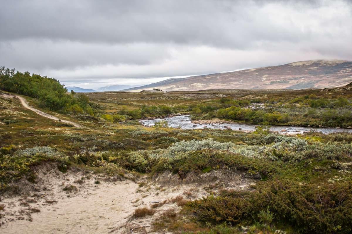 Wandern mit Moschusochsen im Dovrefjell Nationalpark in Norwegen