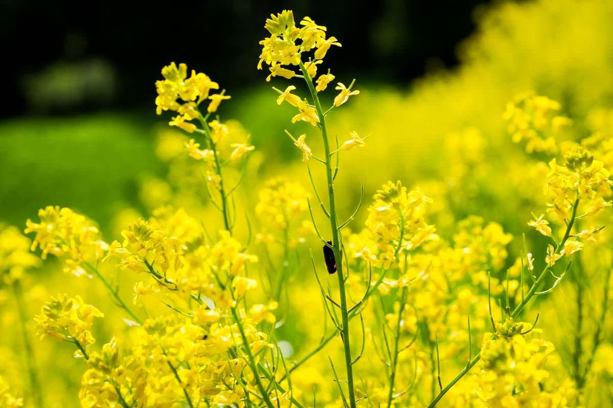 Natur beim Camping: eine Blumenwiese im Nationalpark Triglav